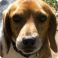 Adopt A Pet :: Bab - Yardley, PA