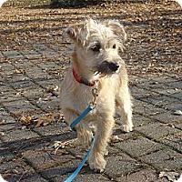 Adopt A Pet :: Stella ADOPTED!! - Toronto/Etobicoke/GTA, ON