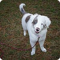 Adopt A Pet :: Twinkle - Wilmington, MA