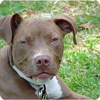 Adopt A Pet :: Cutty - Afton, TN