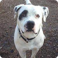 Adopt A Pet :: Bruno - Cedar City, UT