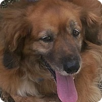 Adopt A Pet :: Ruby - Antioch, IL