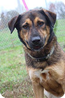 Shepherd (Unknown Type) Mix Dog for adoption in Waldorf, Maryland - Sammy