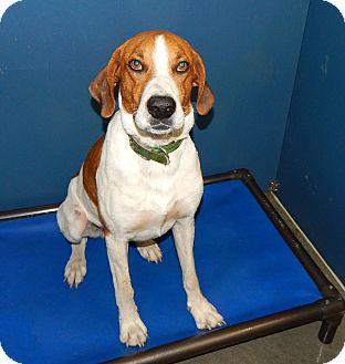 Hound (Unknown Type) Mix Dog for adoption in Henderson, North Carolina - John Boy