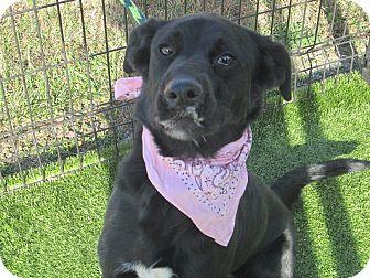 Hound (Unknown Type) Mix Dog for adoption in Cumming, Georgia - Carol