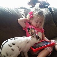 Adopt A Pet :: Frank and Happy Hop - Moneta, VA