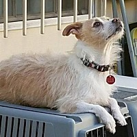 Adopt A Pet :: TOTO - Katy, TX