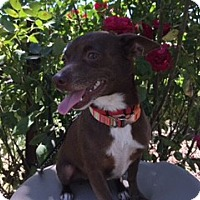 Adopt A Pet :: VIOLET - Elk Grove, CA