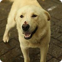 Adopt A Pet :: Segher - Lafayette, IN