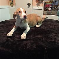 Adopt A Pet :: Aspen - Kittery, ME