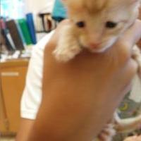 Adopt A Pet :: Wiggy - St. Thomas, VI