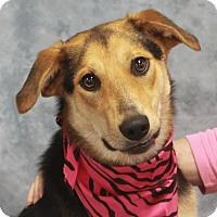 Adopt A Pet :: Salem - Garfield Heights, OH