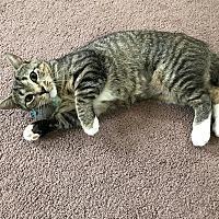 Adopt A Pet :: Sassy - Greensburg, PA