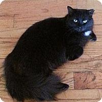 Adopt A Pet :: Bella - Atlanta, GA