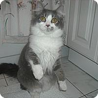 Adopt A Pet :: April - Arlington, VA