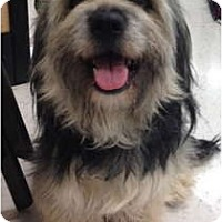 Adopt A Pet :: Fiona - Oceanside, CA