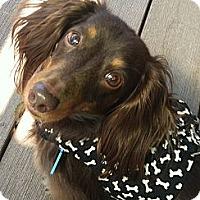 Adopt A Pet :: Andy - San Jose, CA
