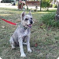 Adopt A Pet :: Oscar - North Little Rock, AR