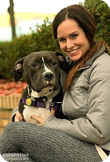 Pit Bull Terrier Mix Dog for adoption in Portland, Oregon - CLEMENTINE