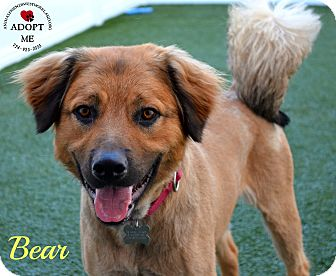 Golden Retriever Mix Dog for adoption in Youngwood, Pennsylvania - Bear