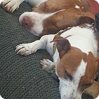 Adopt A Pet :: Hannah - richmond, VA