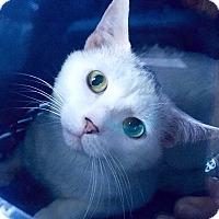 Adopt A Pet :: Whitey - New  York City, NY