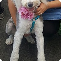 Adopt A Pet :: Molly - La Mirada, CA