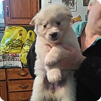 Adopt A Pet :: LILAC - Treton, ON