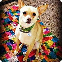Adopt A Pet :: Presley - Tijeras, NM