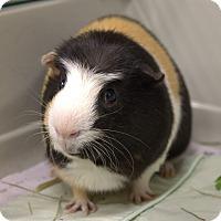 Adopt A Pet :: HALL - Boston, MA