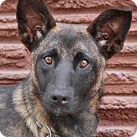 Adopt A Pet :: Dolly von Dollern - Los Angeles, CA