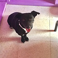 Adopt A Pet :: Blackberry - York, SC