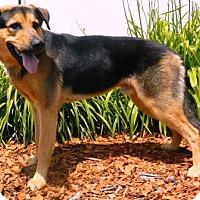 Adopt A Pet :: Rex - Columbus, NE