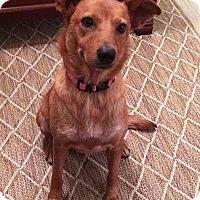 Adopt A Pet :: Ava - Houston, TX