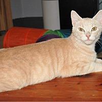Adopt A Pet :: Anya - Stevensville, MD