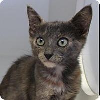 Adopt A Pet :: Jan - Red Bluff, CA
