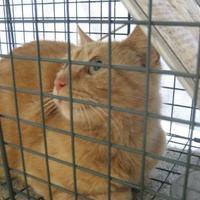 Adopt A Pet :: SPRINTER - Gloucester, VA