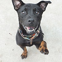 Adopt A Pet :: Cato - Minneapolis, MN