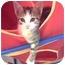 Photo 2 - Domestic Shorthair Kitten for adoption in Tracy, California - Moises-PENDING