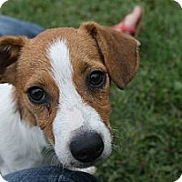 Adopt A Pet :: Rob - Phillips, WI