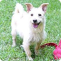 Adopt A Pet :: Willow - Mocksville, NC