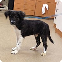 Adopt A Pet :: Donna - Lancaster, OH