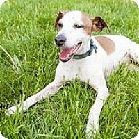 Adopt A Pet :: Fred - Omaha, NE