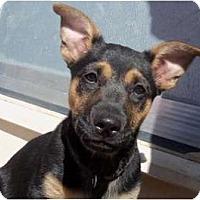 Adopt A Pet :: Rocky - courtesy post - Glastonbury, CT