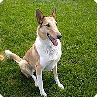 Adopt A Pet :: Shiloh - Minneapolis, MN