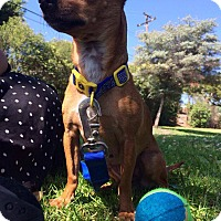 Adopt A Pet :: Meeks (Meeha) - Whittier, CA