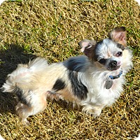 Adopt A Pet :: Mr. Bean - Marietta, GA