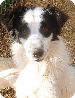 Border Collie Mix Dog for adoption in Boaz, Alabama - Spunky