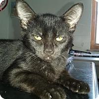 Adopt A Pet :: Onyx - Delmont, PA