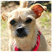 Adopt A Pet :: Sophia - Forked River, NJ